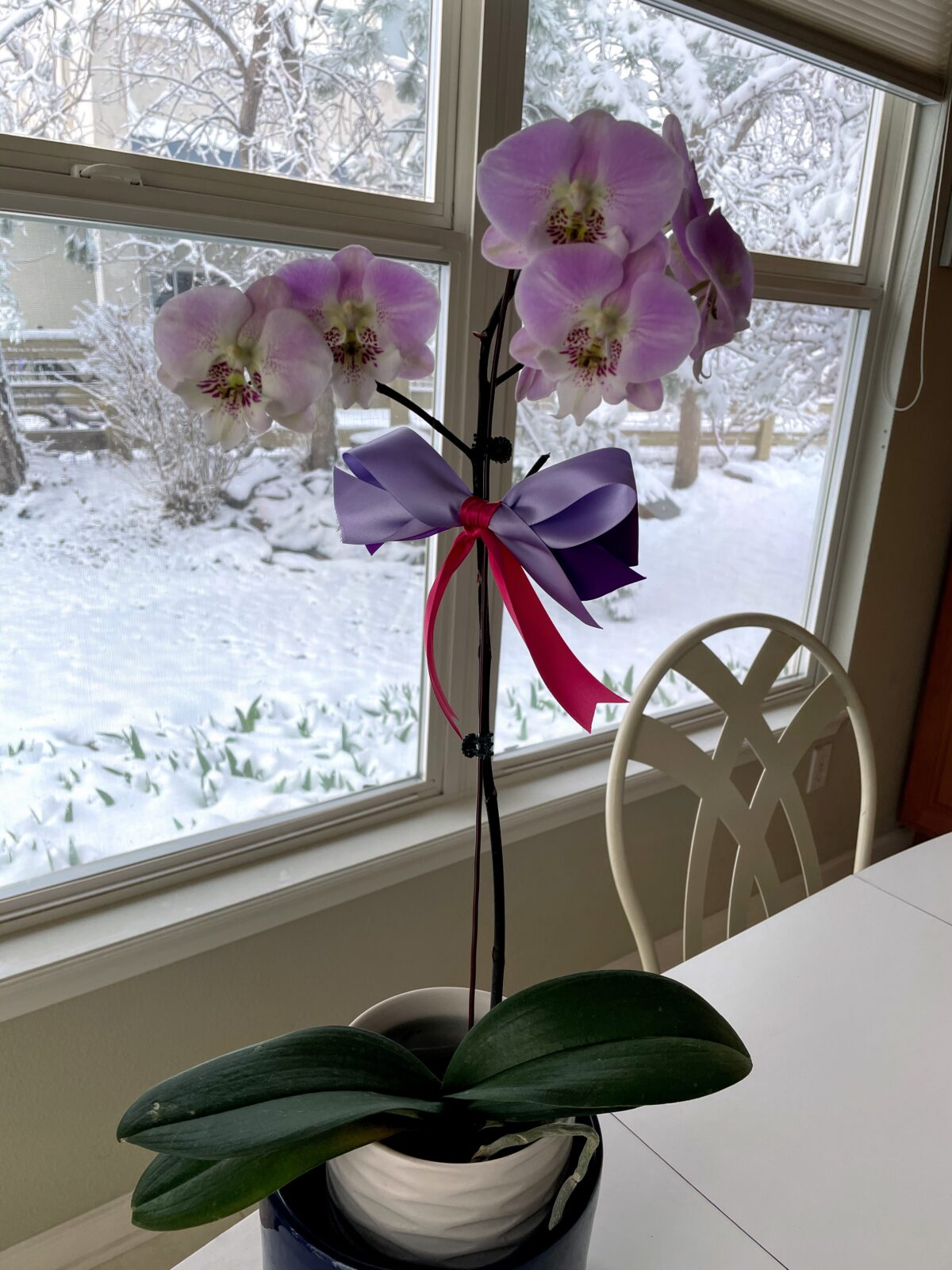Happy National Orchid Day